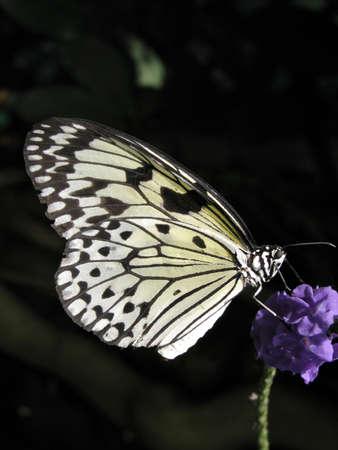 Butterfly-3 Banco de Imagens - 516940