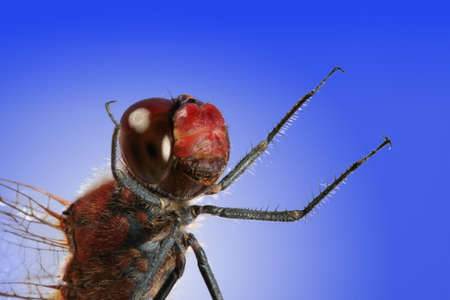 Close-up shot of red dragonfly photo
