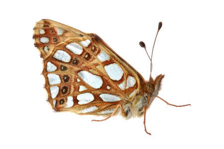 Butterfly isolated on white Banco de Imagens - 535062