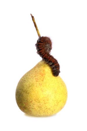 hairy pear: Caterpillar on a Pear