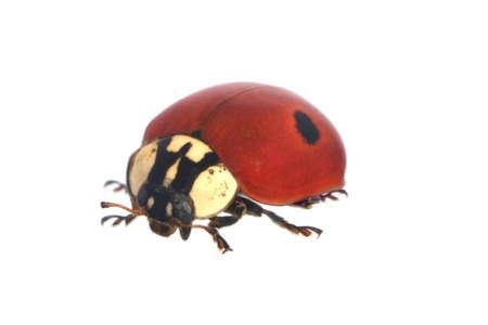 Ladybird Banco de Imagens