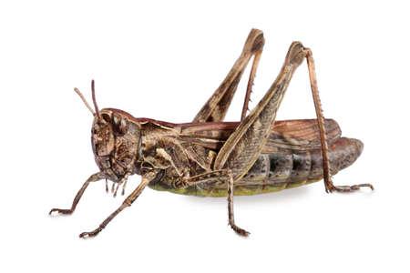 Grasshopper Banco de Imagens - 900199