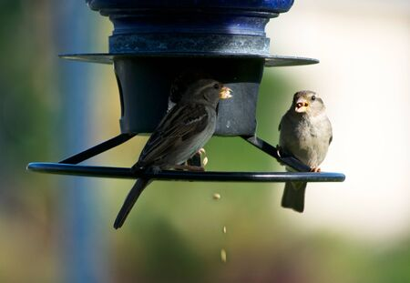 bird feeder: Two Birds at a Feeder