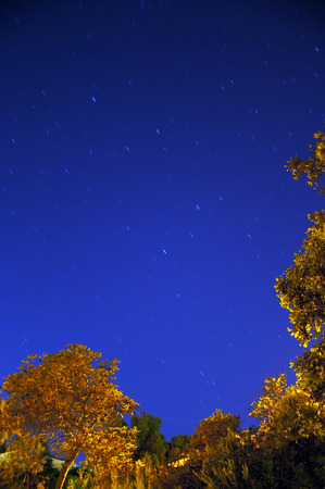 gazing: Blue sky with stars trailing, and yellow trees in the foreground Stock Photo