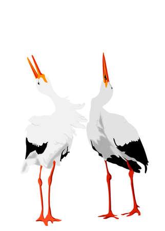 mutual: stork pair mutual bill-clattering Stock Photo
