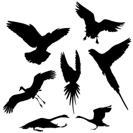 flying bird  (dove,goose,stork ,parrot and swan) vector silhouettes collection  Vector