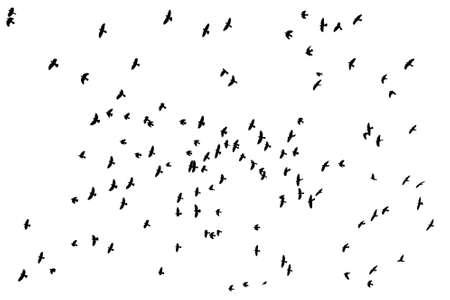 Flock of birds silhouette over white  Illustration