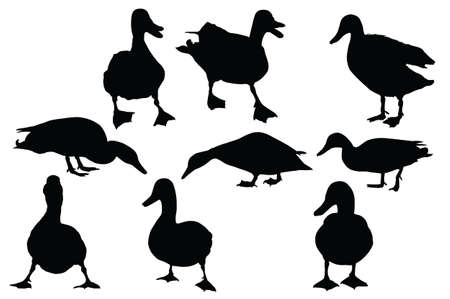 pato real: colecci�n de nueve �nade real vector siluetas