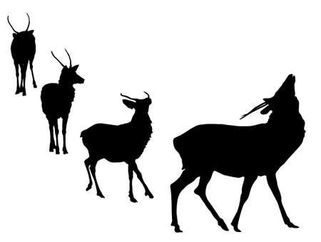 buck deer grunting silhouette Vector