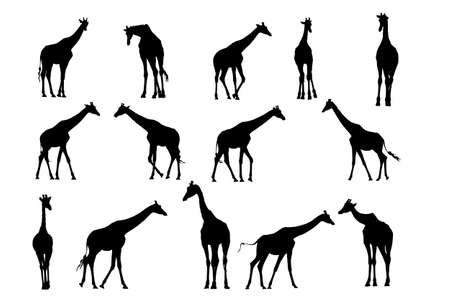 giraffe vector  silhouette collection for designers Vector