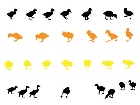 duckling silhouette collection for designers Stock Vector - 3081849