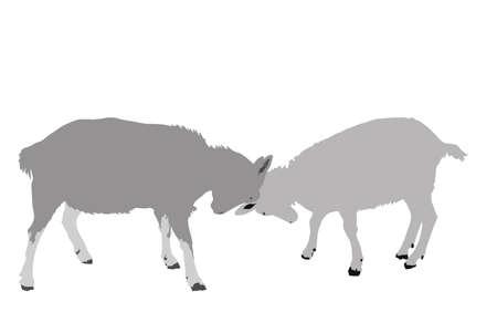 encounter: due capre Face Off illustrazione