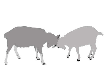 caprine: two goats face off illustration Illustration