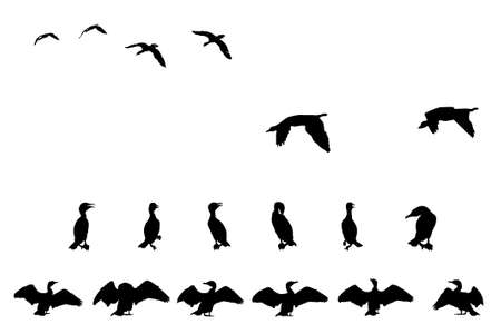 cormorant silhouette collection for designers Stock Vector - 3081851