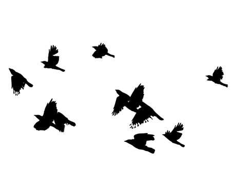 zwerm vogels: zwarte vogels in de vlucht over wit, vector illustratie,