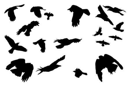 siluetas: birds in flight,  collection for designers Illustration