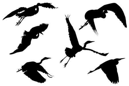 grey heron: heron flying   vector collection