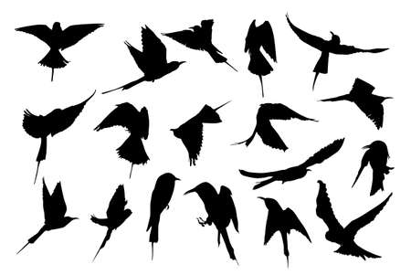 flock:    silhouette collection of European Bee-eater