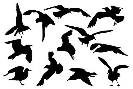 seagull silhouettes, collection for designers  Illustration