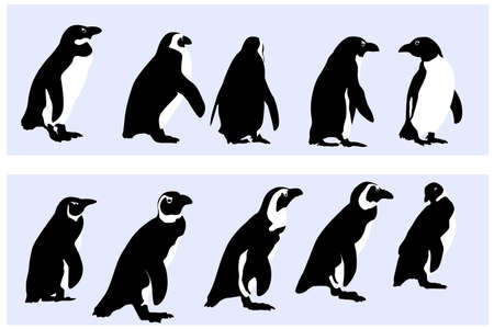 wrapping animal: penguins,  vector collection for designers