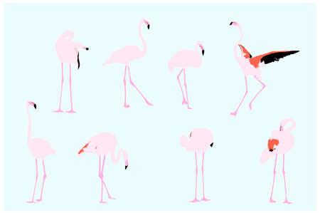 flamingi: flamingów, wektor kolekcja dla projektantów
