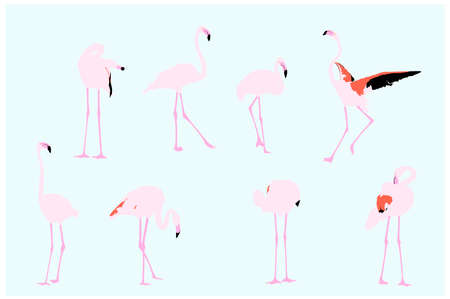 pink flamingo: flamingos, vector collection for designers