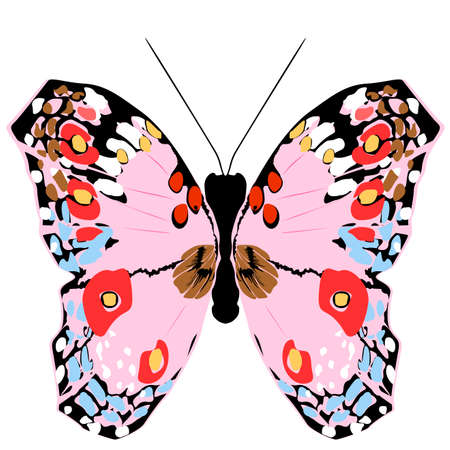 graceful: colorful butterfly,vector illustration