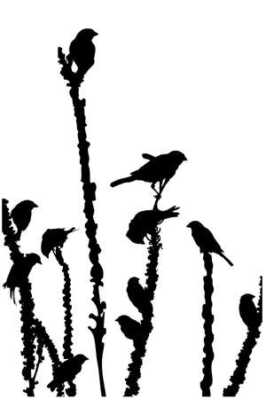 small flock:  sparrows feeding on the plant, silhouette