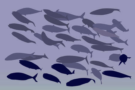 shoal of fish, vector illustration Vector