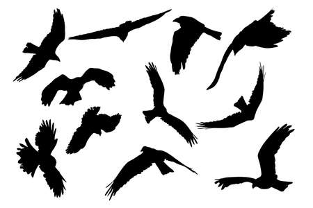birds of prey aloft, vector collection Vector