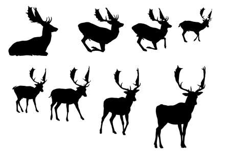 buck deer silhouette, vector collection Illustration
