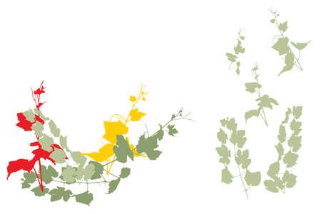 vitis: easy editable grapevine vector collection