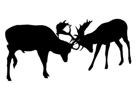 antlers silhouette: Fallow buck deer fighting one another Illustration
