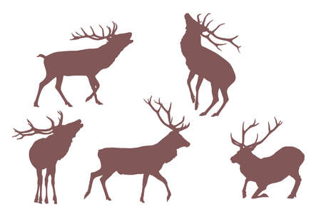 antlers silhouette: buck deer,  elements for designers Illustration