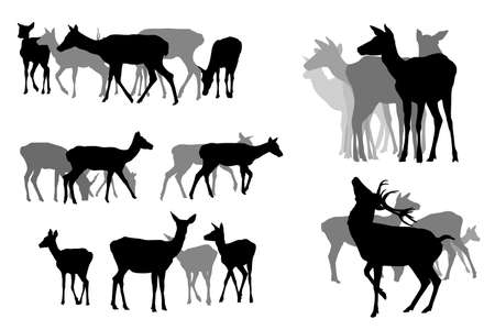 five deer herds, vector collection Vector
