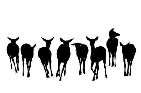 doe: deer herd running silhouette,  front view