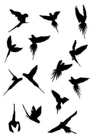 flying parrots, vector collection for designers Vector