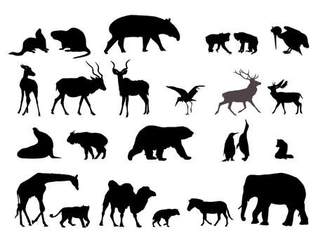 wild animal detailed silhouettes, vector collection