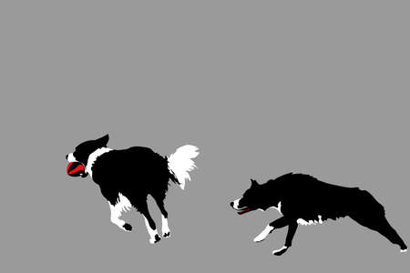 gait: two happy dogs playing with ball