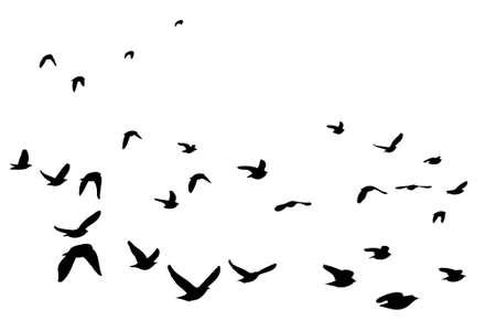 zwerm vogels: koppel van de Europese Starling silhouet Stock Illustratie