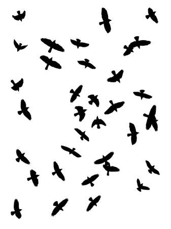 flock of birds: vector silhouette of crows  flying Illustration