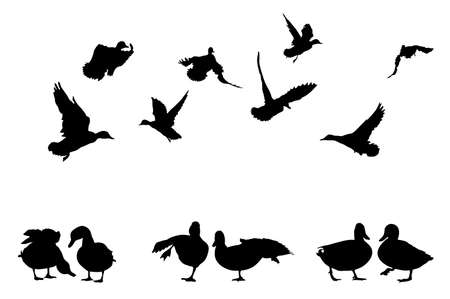 mallard duck silhouettes collection for designers Vector