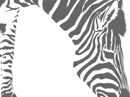 zebra motif background with copy space Vektorové ilustrace