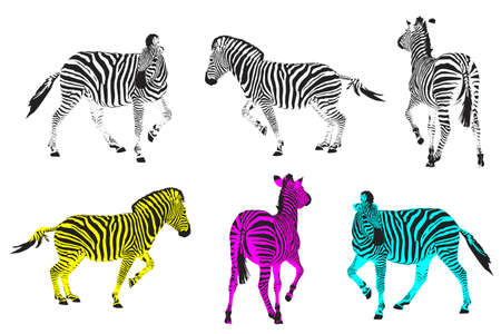 running zebras, design elements