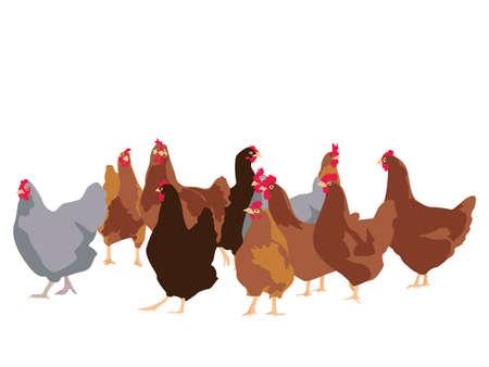 flock of chickens, vector illustration
