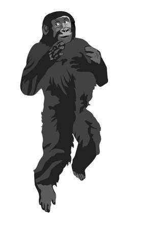 paliza: ilustraci�n vectorial de gorila golpeando su pecho mientras se ejecuta Vectores