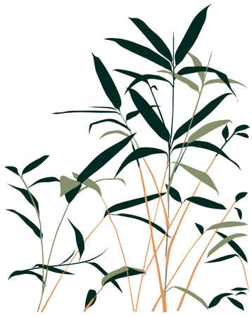 cane: bamboo vector illustration