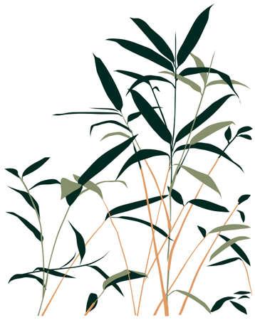 fengshui: bamboo vector illustration