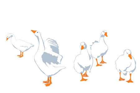 waterfowl: flock of geese, vector illustration