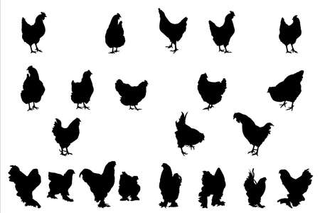 vector illustration  hen: chickens  silhouettes,  collection for designers
